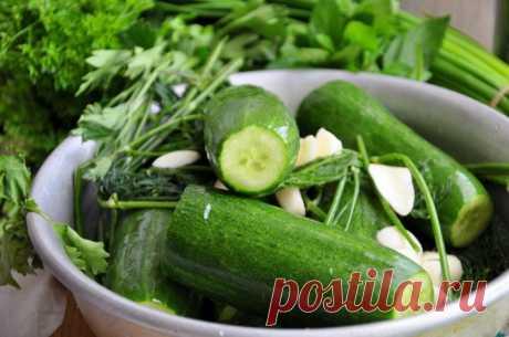 Малосольные огурцы - пошаговый  с фото - малосольные огурцы - как готовить: ингредиенты, состав, время приготовления - Леди Mail.Ru