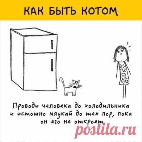 Каждый из нас хотя бы один раз в жизни мечтал стать котом  #добро_#волшебство_#настроение