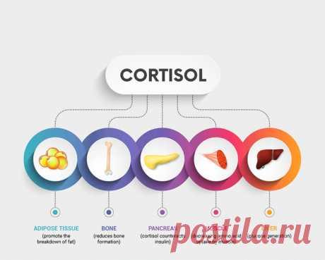 Что мы знаем о кортизоле Как известно, гормон стресса кортизол производят наши надпочечники. Он может вырабатываться в избытке или в недостатке. В норме всплеск кортизола происходит в утренние часы. Но бывают и другие состояния.