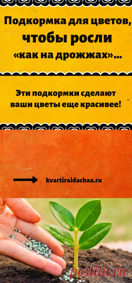 Подкормка для цветов, чтобы росли «как на дрожжах»… Эти подкормки сделают ваши цветы еще красивее!