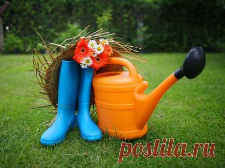 Что делать на даче в июне: садовые работы летом - Smak.ua