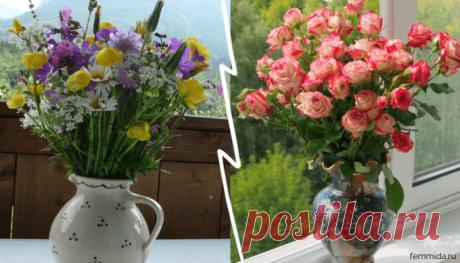 7 профессиональных советов, как продлить срок жизни цветов