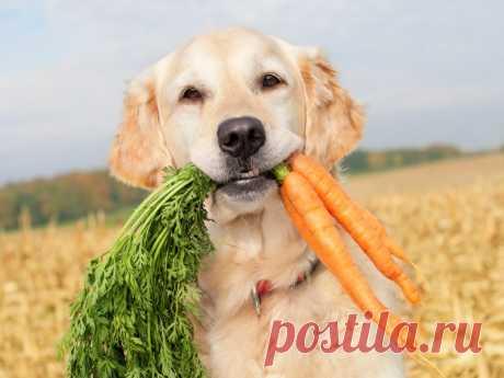 Можно ли считать веганство – полным отказом от заведения домашних животных? | nashi-pitomcy.ru