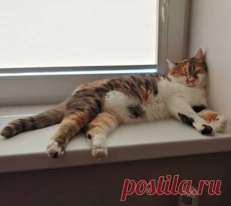 У кошки Миланы осенний сплин*🍁