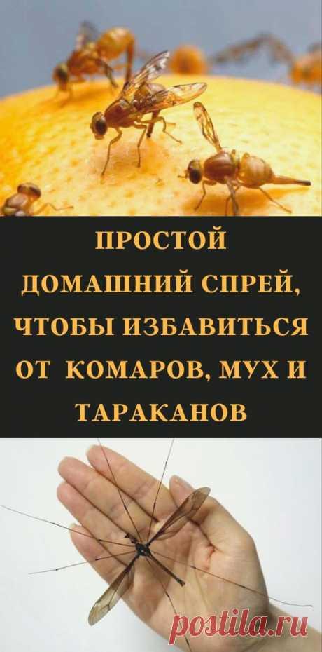 Простой домашний спрей, чтобы избавиться от комаров, мух и тараканов
