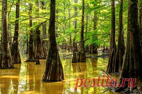 South Arkansas Swamp Tour   You could film swamp people here…   Flickr