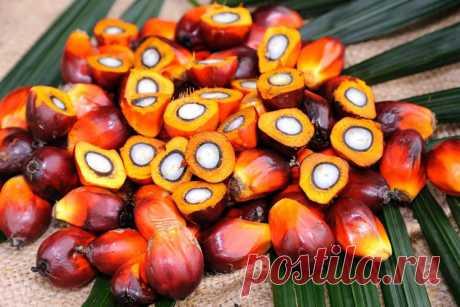 Масличная пальма, джамболан, атемойя, ши: самые удивительные фрукты со всего мира Двадцатая часть самых необычных экзотических фруктов со всего мира, которые поражают не только своей чудаковатой формой, но и специфическим запахом и пикантным вкусом …