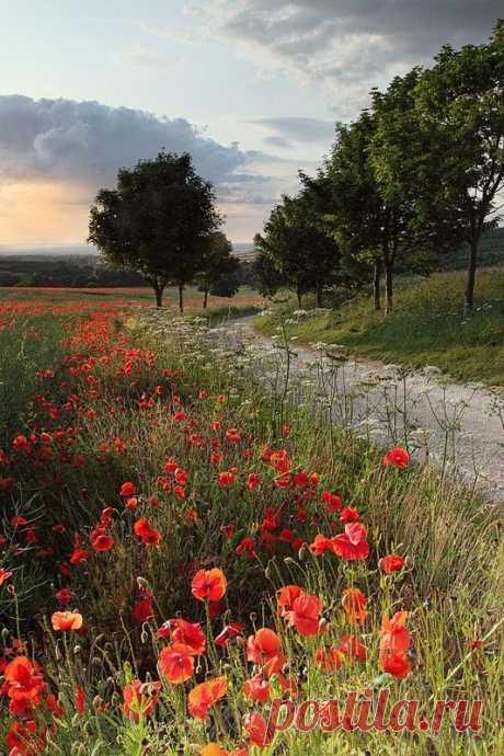 R — renamonkalou: Poppy Path | Leigh Rebecca
