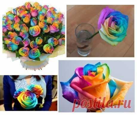 Секрет разноцветных роз - полезные советы
