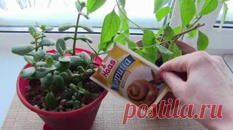 Просто добавьте немного корицы в цветочный горшок. Эффект потрясающий! — Дай урожай