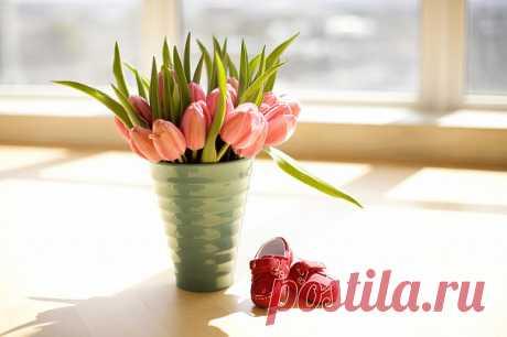 Видеоинструкция: как сохранить срезанные цветы тюльпаны и как продлить жизнь букету - Летидор