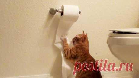 ¿Por qué los animales le siguen en el cuarto de baño?