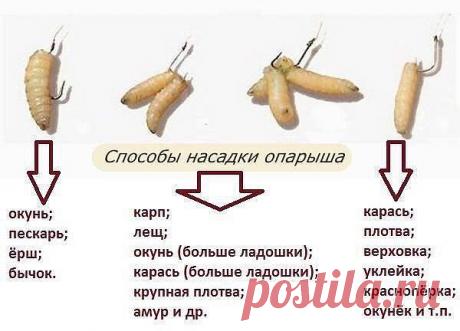Los modos de la tobera oparysha.