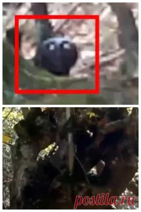5 СТРАННЫХ СУЩЕСТВ ЗАСНЯТЫХ НА КАМЕРУ. реальные странные существа снятые на камеру в лесу. загадочные существа. паранормальное