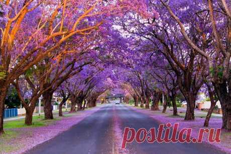 Самые красочные места на планете (часть 10) В этой статье мы рассмотрим такие красочные и удивительные места на планете, как Сезон Жакаранды в городе Графтон и Большая Беседка в Парке Южного Берега в Австралии, Гейзер Флай в США, Тропический парк Нонг Нуч в Тайланде …