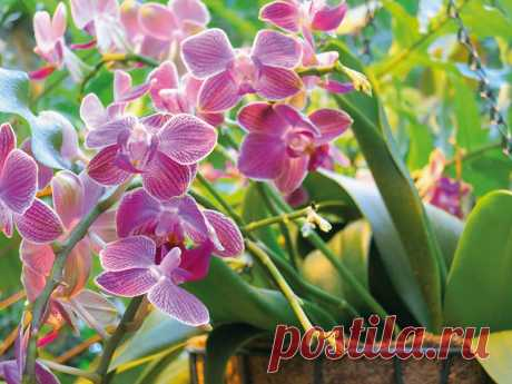 Экологичные способы удобрения домашних растений