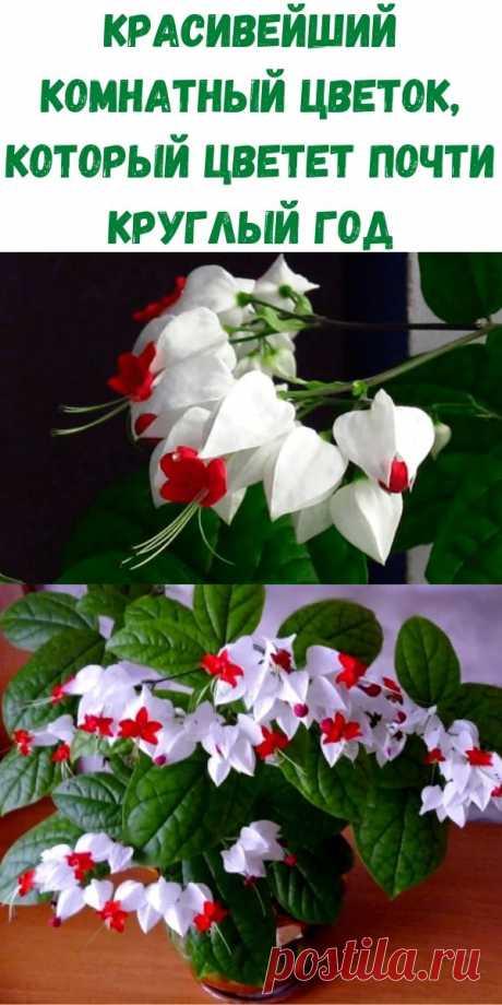 Красивейший комнатный цветок, который цветет почти круглый год - Рецепты вкусных блюд
