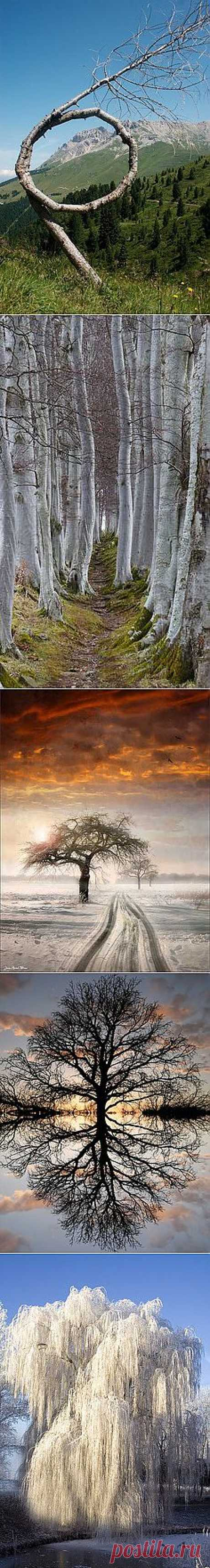 Magestic Trees