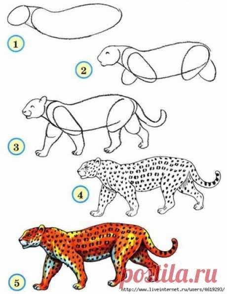 34 карточки в коллекции «Рисование животных поэтапно» пользователя Наталья П. в Яндекс.Коллекциях