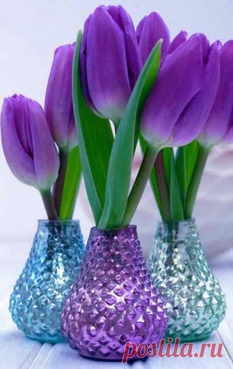 Пусть в сердце каждого живёт Весна И каждый день цветами украшает! Приносит много радости она, Заветные мечты все исполняет!