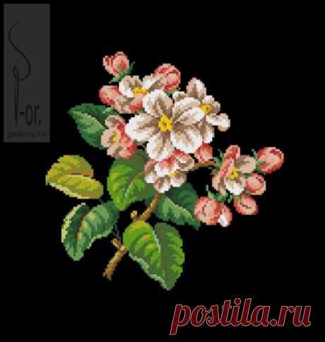 (6) Gallery.ru / Фото #1 - Веточка яблони. Завершён - Mariaya