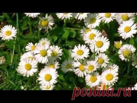 Красивая музыка и цветы для моих друзей!!! - YouTube