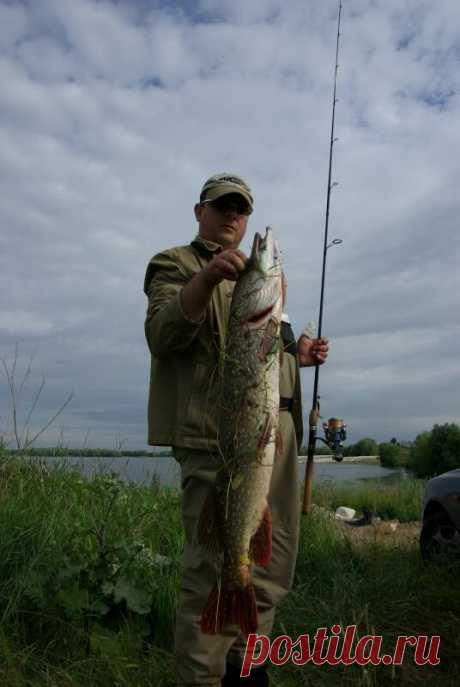 Щука и спиннинг… | журнал Рыбалка GROUP | Яндекс Дзен