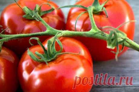 Польза для здоровья от употребления помидоров
