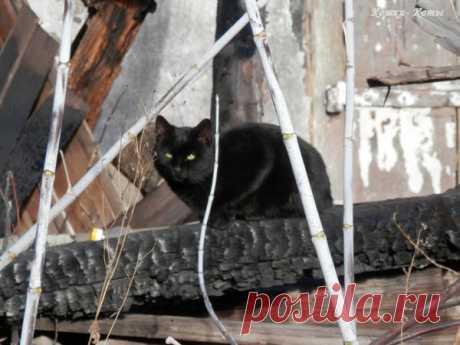 Там, где когда-то был дом. Кошки на развалинах домов | Кошки & Коты | Яндекс Дзен  Канал «Кошки & Коты». Кошка – не просто домашнее  животное. Она символ домашнего тепла и уюта. И она сильно привязана к дому. Даже дворовые кошки, называемые бродячими на самом деле никакие не бродячие. У них всегда есть дом, который они себе выбрали и считают своим. И они от него далеко не уходят...