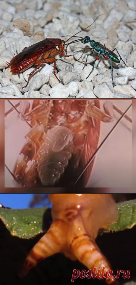 У каких представителей животного мира берут идеи создатели триллеров-ужастиков | Своих не едим. | Яндекс Дзен