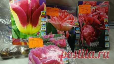 Какие луковицы тюльпанов следует выбирать при покупке? | Марина Мэй | Яндекс Дзен