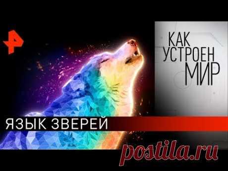 """Язык зверей. """"Как устроен мир"""" с Тимофеем Баженовым (26.11.19)."""