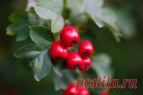 Растения-антидепрессанты, которые стоит посадить на даче | Полезно (Огород.ru)