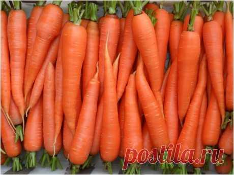 Секреты хорошей моркови.   Многие дачники жалуются, что морковь уродилась мелкой. Обычно это происходит от несвоевременного или некачественного прореживания. Первое прореживание производят при появлении первого настоящего листа. А всего надо проредить морковь 2-3 раза, при этом окончательное расстояние между корнеплодами зависит от сорта и способа посадки - рядами, лентами или др. Так, моркови цилиндрической формы места надо меньше, чем конической.  Если морковь растрескив...