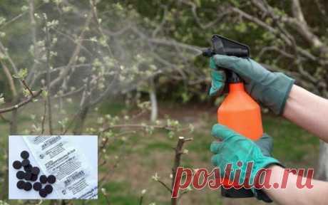 Просроченные лекарства для сада-огорода  От нематоды помогут избавиться лекарства против гельминтов (растолките две-три таблетки и растворите в 10 л воды). Полейте этим раствором зараженные посадки, и нематоды быстро погибнут. Эти же таблетки помогут в борьбе с капустной мухой: двухтрех поливов будет достаточно.  Со злостной фитофторой и бурой пятнистостью вам помогут бороться антибиотики: Трихопол, Ампициллин и Эритромицин. Растворите две-четыре таблетки в ведре воды и оп...