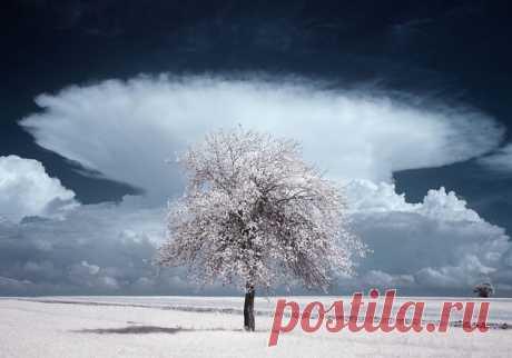 Яркие инфракрасные пейзажи Пшемыслава Крука (Przemyslaw Kruk) — Фотоискусство