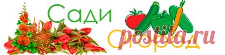 СадиОгород – очень полезный сайт о растениях!