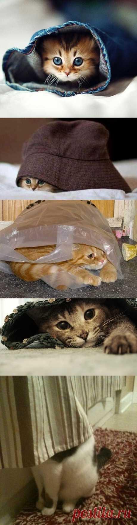 ¿Y quien esto a nosotros se ha escondido aquí?))