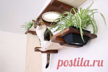 Как позаботиться о кошке — Полезные советы
