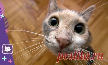😸😾Кошачьи жесты: как понять питомцев, или чего хотят кошки | Нос, хвост, лапы | Яндекс Дзен