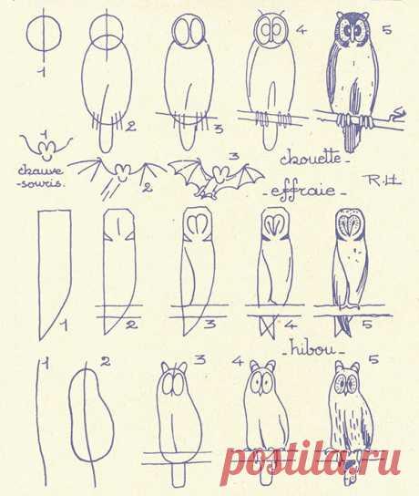 Схемы для рисования животных