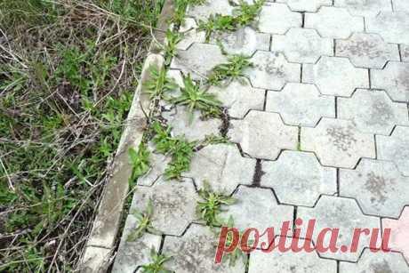 Как избавиться от травы между тротуарной плиткой быстро и дешево