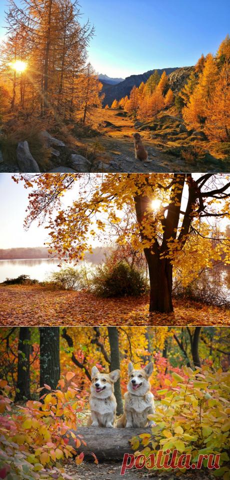 Осень рисует свои декорации.
