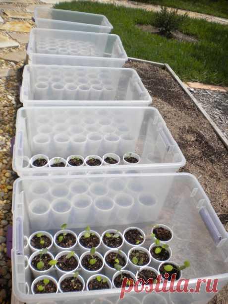 Гений! Интересная идея для стартовых установок. Маленькие зеленые домики...я никогда не думала об этом для моего сада! @ свой-в-зеленый-жизнь