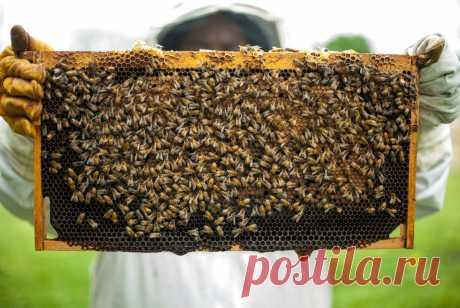 Липовый, гречишный и цветочный: какой мед самый вредный | Умная | Яндекс Дзен