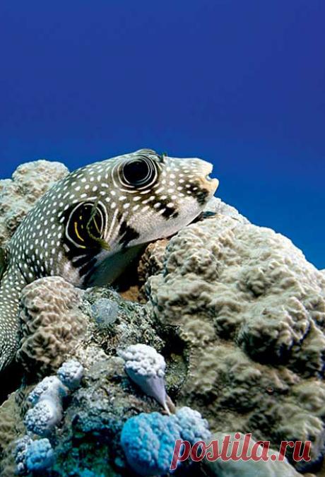 Впрозрачных водах Красного моря, наприбрежных рифах, обитает масса разноцветной рыбьей мелочи, поэтому эти места так любят начинающие аквалангисты
