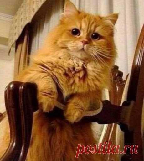 Если в доме рыжий кот, значит - счастье в нём живёт!