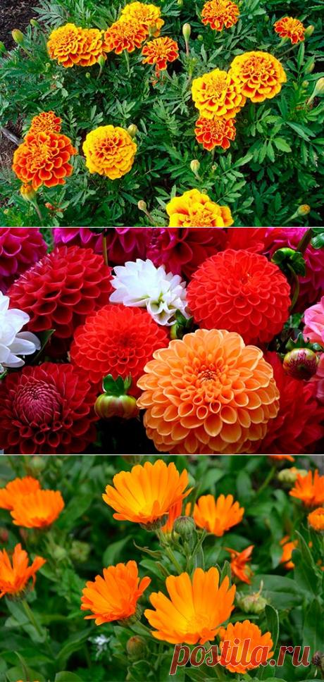 Зачем сажать цветы на огороде