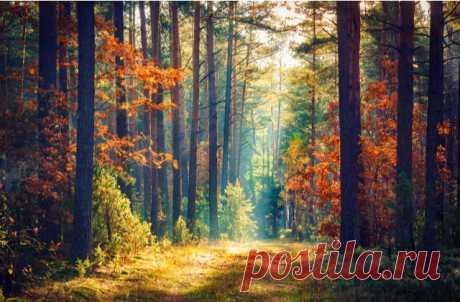 Послушать звуки из лесов со всего света теперь можно на сайте Sounds of the Forest.