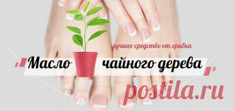 Тонкости лечения грибка ногтей маслом чайного дерева в домашних условиях | Полезные советы и идеи для жизни | Яндекс Дзен